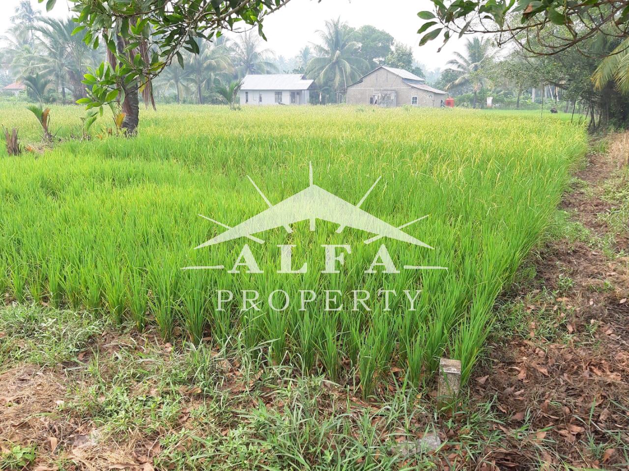 Tanah Pal 13 Kakap, Pontianak, Kalimantan Barat - 2