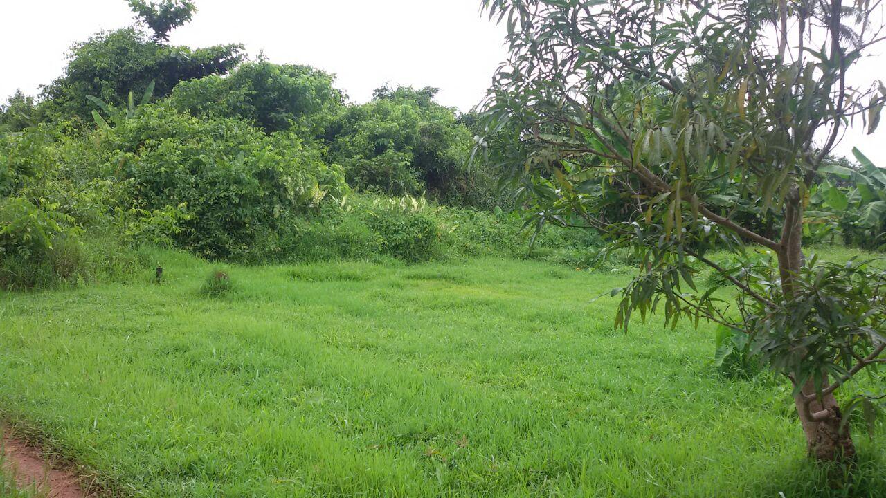 Tanah Karya Baru Pontianak Kalimantan Barat - 6
