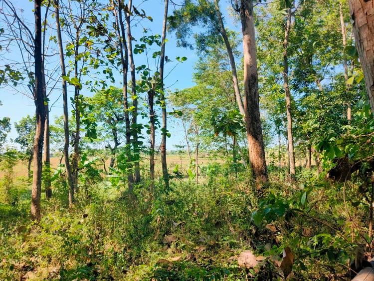 Tanah Idaman Kedawung Sragen - 2