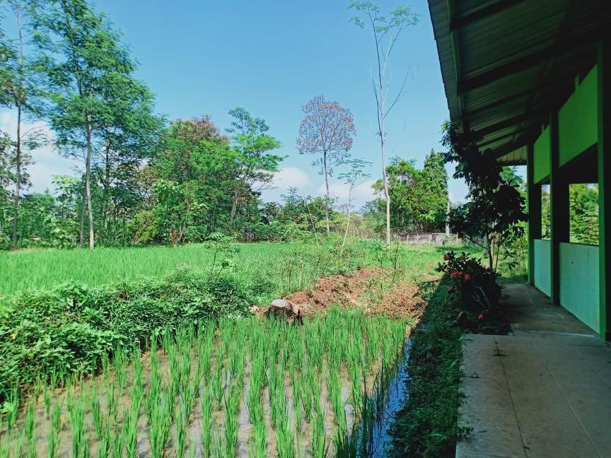 Jual Tanah Bonus Rumah Tepi Jl Raya Solo-Tawangmangu Karanganyar - 5
